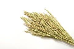 Закройте вверх черенок риса на белой предпосылке Стоковое Изображение