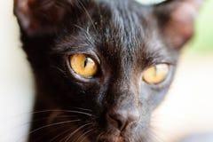 Закройте вверх черной стороны котенка Стоковая Фотография RF