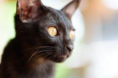 Закройте вверх черной стороны котенка Стоковые Фотографии RF