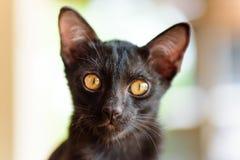 Закройте вверх черной стороны котенка Стоковое Изображение