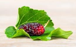 Закройте вверх шелковицы с листьями зеленого цвета на белой предпосылке изолированной предпосылкой Это плодоовощ и можно съесть в Стоковая Фотография RF