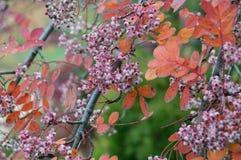 Закройте вверх ягод осени с чувствительными оранжевыми листьями стоковые фотографии rf