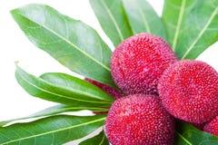 Закройте вверх ягоды или bayberry воска Стоковые Изображения RF