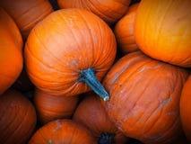 Закройте вверх ярких оранжевых тыкв хеллоуина Стоковые Изображения