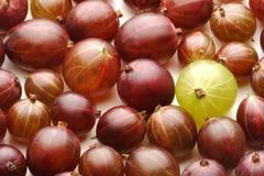 Закройте вверх gooseberrys на белой предпосылке Стоковое Фото