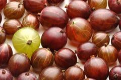 Закройте вверх gooseberrys на белой предпосылке Стоковые Фотографии RF