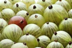 Закройте вверх gooseberrys на белой предпосылке Стоковая Фотография