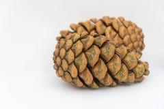 Закройте вверх 2 pinecones на белой предпосылке Стоковое фото RF