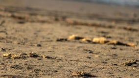Закройте до песка пляжа Стоковая Фотография