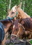 закройте каждо лошадей другие стоящие 3 к Стоковые Изображения