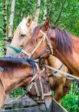 закройте каждо лошадей другие стоящие 3 к Стоковые Фотографии RF