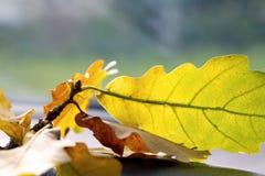 закройте листья вверх Стоковое Изображение RF