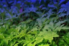 закройте листья вверх Стоковые Фотографии RF