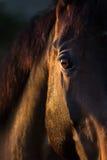 закройте лошадь глаза вверх Стоковые Фотографии RF