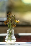 Закройте до цветков witherd в стеклянной вазе (Свет окна и v Стоковая Фотография RF
