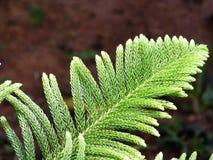 Закройте поднимает листья Стоковая Фотография