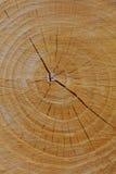 закройте текстуру отрезока вверх по деревянному стоковые фото