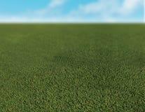 закройте траву вверх Стоковое фото RF