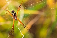 Закрутка паука сеть стоковое фото rf