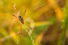 Закрутка паука сеть стоковое изображение rf