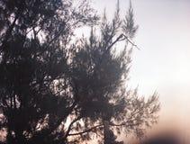 Закручивая дерево стоковые фотографии rf