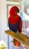 Закрыно вверх попыгая Macaw стоковое фото rf