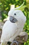 Закрыно вверх попыгая Macaw стоковое изображение