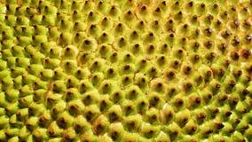 Закрытая-вверх кожа джекфрута Стоковая Фотография RF