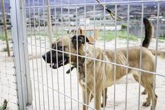 Закрытая псарня собаки Стоковое Изображение RF