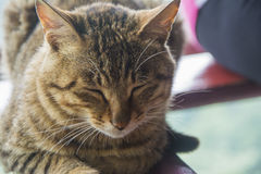 Закрытые глаза кота Стоковые Изображения RF