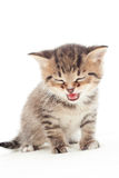 Закрытые глаза котенка Tabby Стоковые Фотографии RF