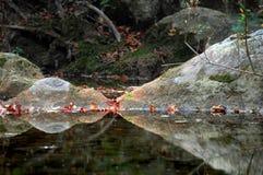закрытые мечтая рыбы глаз Стоковая Фотография RF