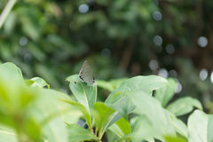 Закрытый вверх по бабочке на fleaf с предпосылкой bokeh Стоковые Изображения RF