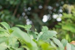 Закрытый вверх по бабочке на fleaf с предпосылкой bokeh Стоковое фото RF