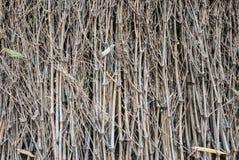 Закрытый вверх по сухому бамбуку Стоковая Фотография RF