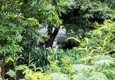 Закрытый лес с рекой на заднем плане стоковые изображения rf