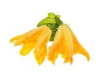 Закрытый цветок листьев vegetable сердцевины и зеленого цвета Стоковые Изображения