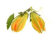 Закрытый цветок vegetable сердцевины Стоковое Фото