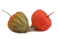 2 закрытых томата шелухи изолированного на белой предпосылке Стоковое Фото
