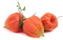 3 закрыли томаты шелухи при лист изолированные на белой предпосылке Стоковые Фотографии RF
