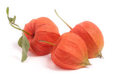3 закрыли томаты шелухи при лист изолированные на белой предпосылке Стоковая Фотография RF