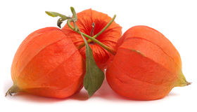 3 закрыли томаты шелухи при лист изолированные на белой предпосылке Стоковые Изображения