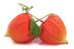2 закрыли физалис или томаты шелухи при лист изолированные на белой предпосылке Стоковая Фотография RF