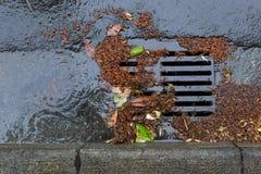Закупорил сток улицы во время шторма дождя Стоковая Фотография