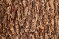 Залайте текстура текстуры деревянная для космоса предпосылки для текста Стоковое Изображение