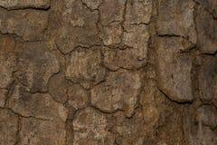 Залайте текстура текстуры деревянная для космоса предпосылки для текста Стоковые Фото
