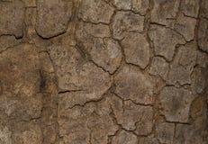 Залайте текстура текстуры деревянная для космоса предпосылки для текста Стоковое Фото
