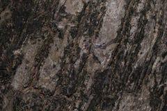Залайте текстура текстуры деревянная для космоса предпосылки для текста Стоковая Фотография
