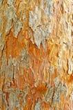 залаяйте глубокий лимб никакой старый вал текстуры сосенки Стоковое Фото