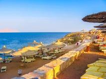 Залив Египет акул Стоковое Изображение RF